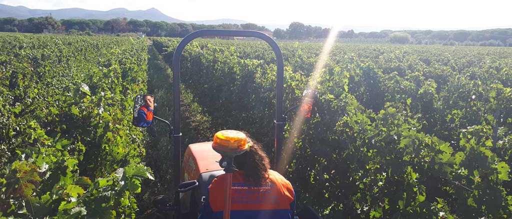 Vendemmia 2019 a Podere Conca: trattore in vigna