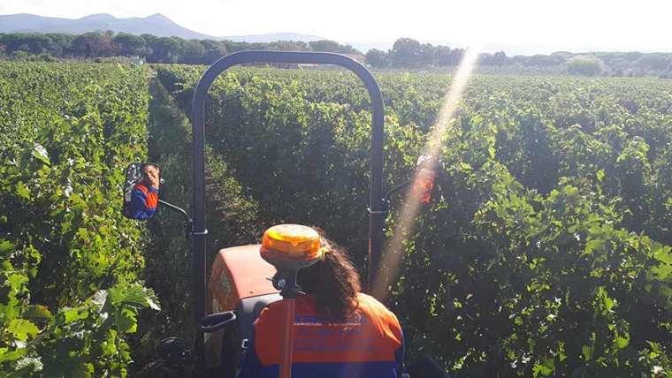 Grape Harvest at Podere Conca