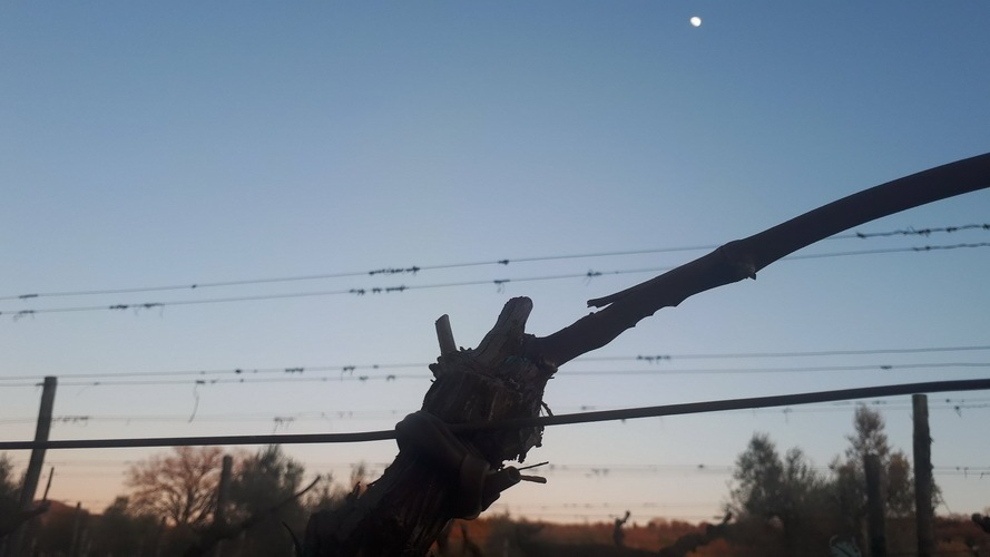 The moon over Ferruggini vineyards
