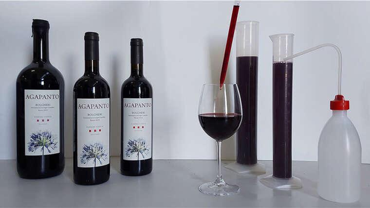 Resveratrolo: l'antiinfiammatorio e antiossidante nelle bucce dell'uva