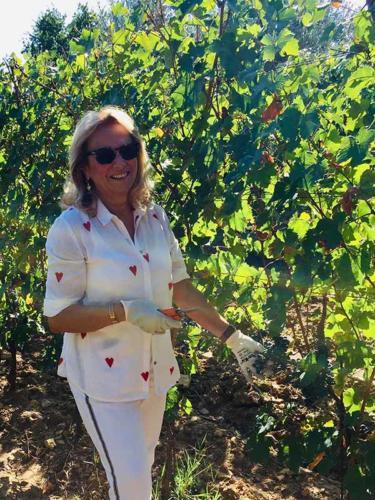 Silvia Cirri nella vigna raccoglie grappoli di uva