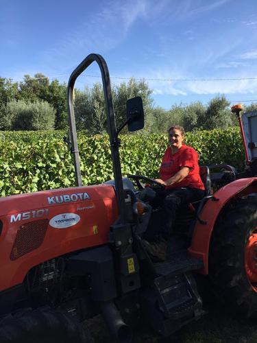 Vendange à Podere Conca 2019 tracteur
